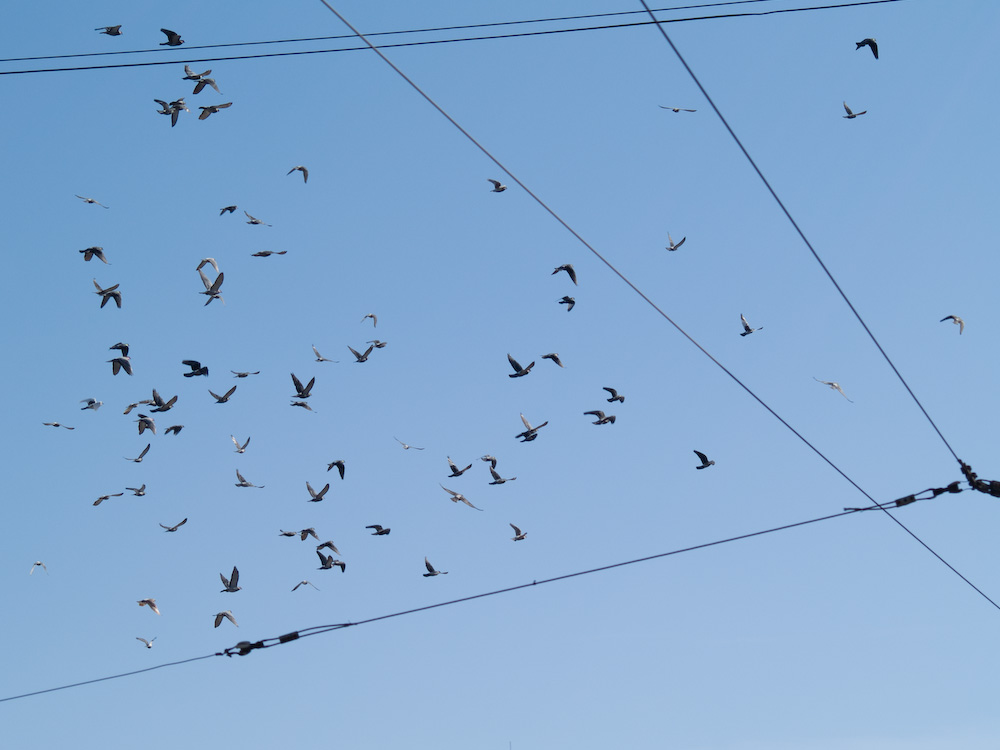 Birds on wired sky, Cluj-Napoca, Romania