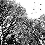 Trees, Bucharest, Romania