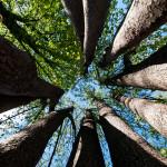 Vertical Trees, Belgrade, Serbia